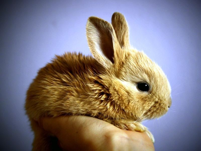 how to avoid rabbit starvation